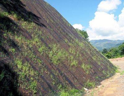erózióvédő
